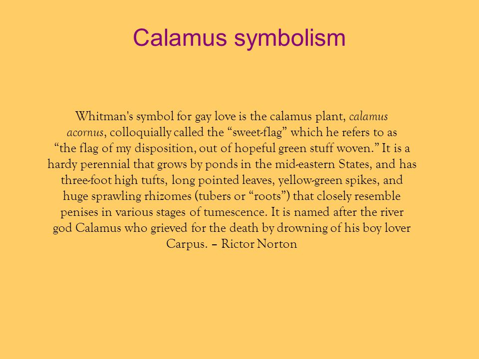 Calamus symbolism Whitman s symbol for gay love is the calamus plant, calamus. acornus, colloquially called the sweet-flag which he refers to as.