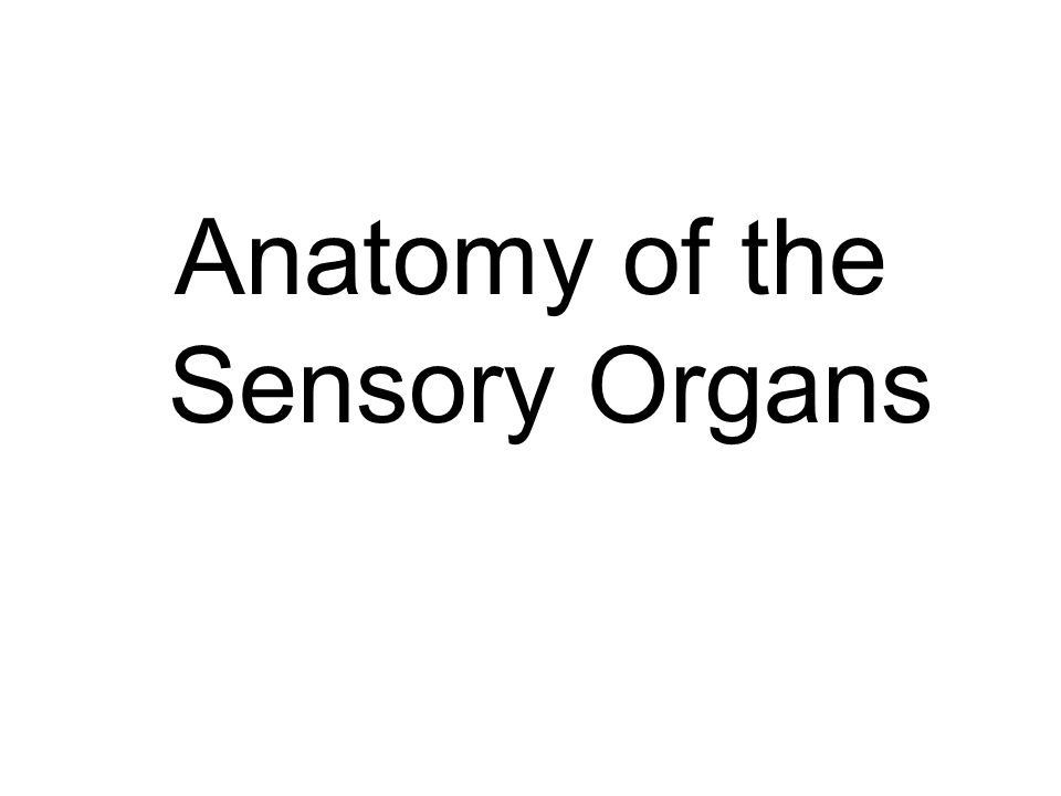 Anatomy of the sensory organs ppt video online download ccuart Image collections