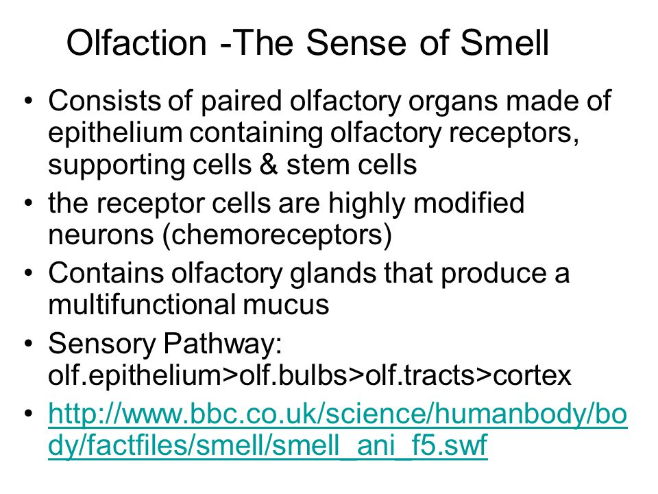 Olfaction -The Sense of Smell