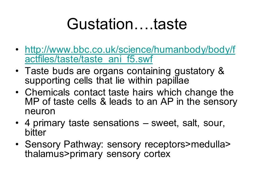 Gustation….taste http://www.bbc.co.uk/science/humanbody/body/factfiles/taste/taste_ani_f5.swf.