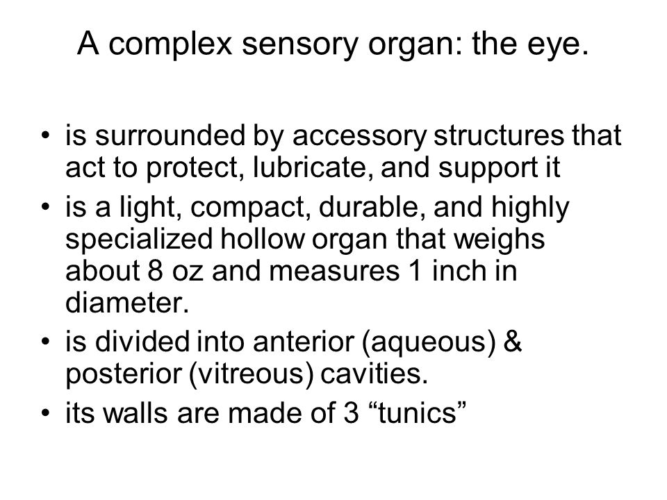 A complex sensory organ: the eye.