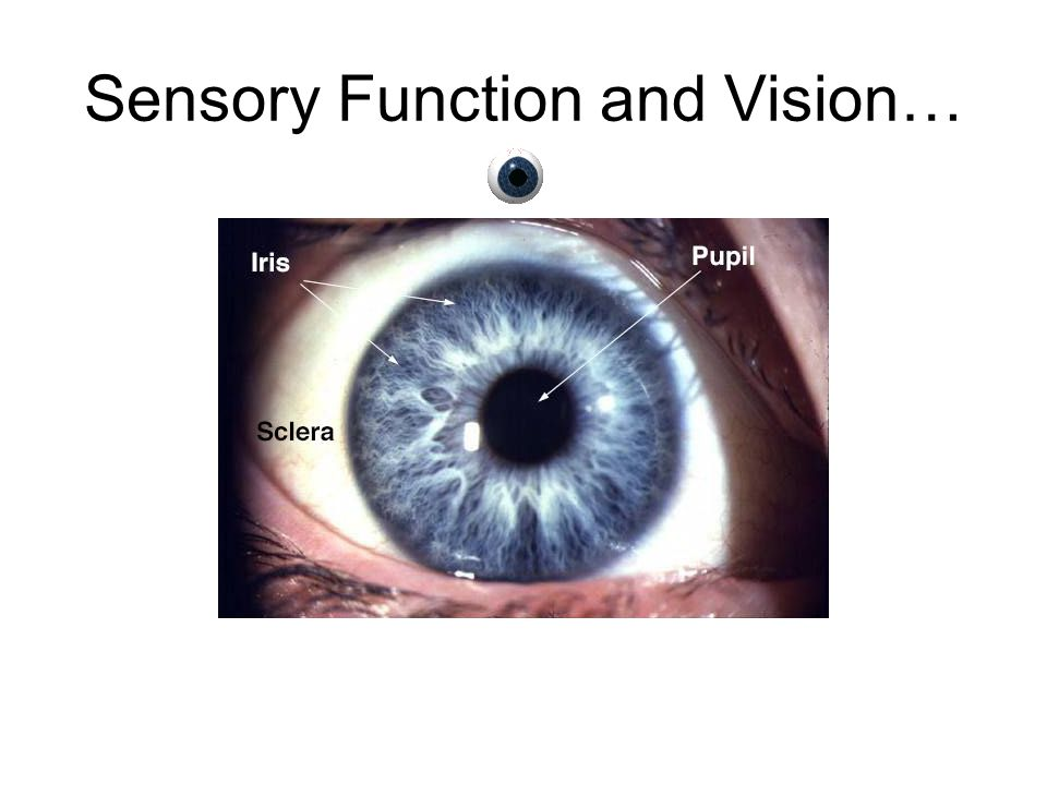 Sensory Function and Vision…
