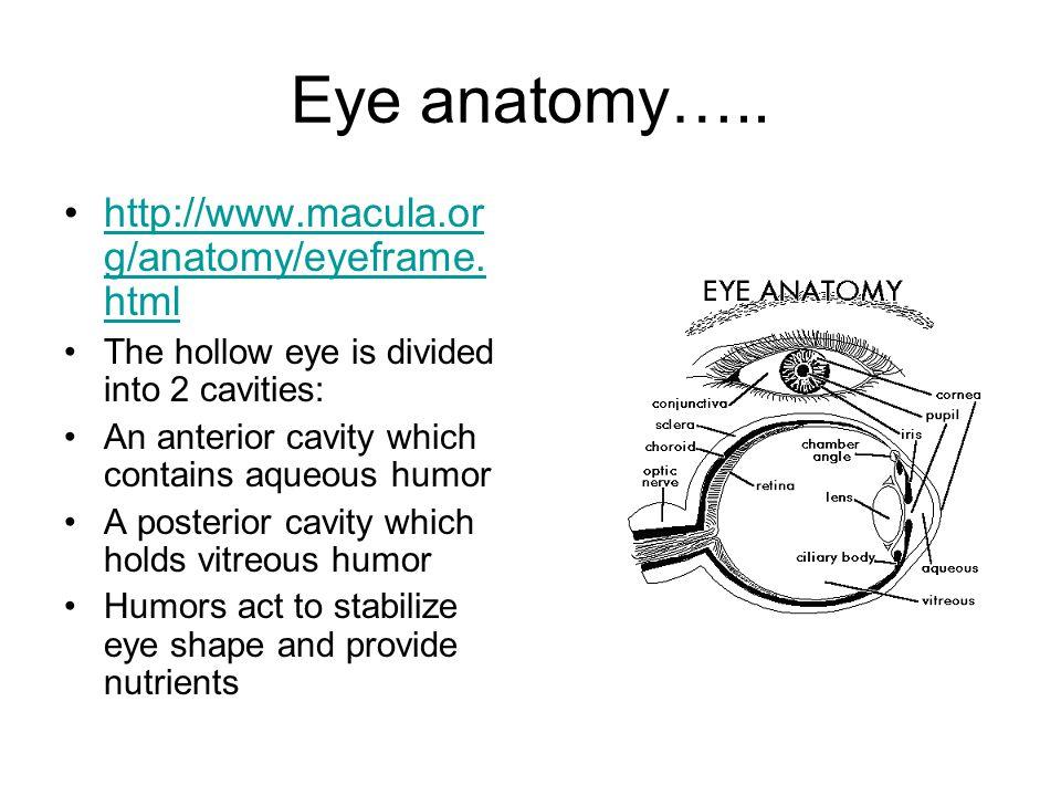 Eye anatomy….. http://www.macula.org/anatomy/eyeframe.html