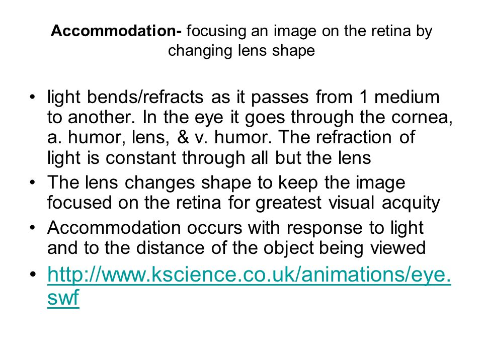 Accommodation- focusing an image on the retina by changing lens shape