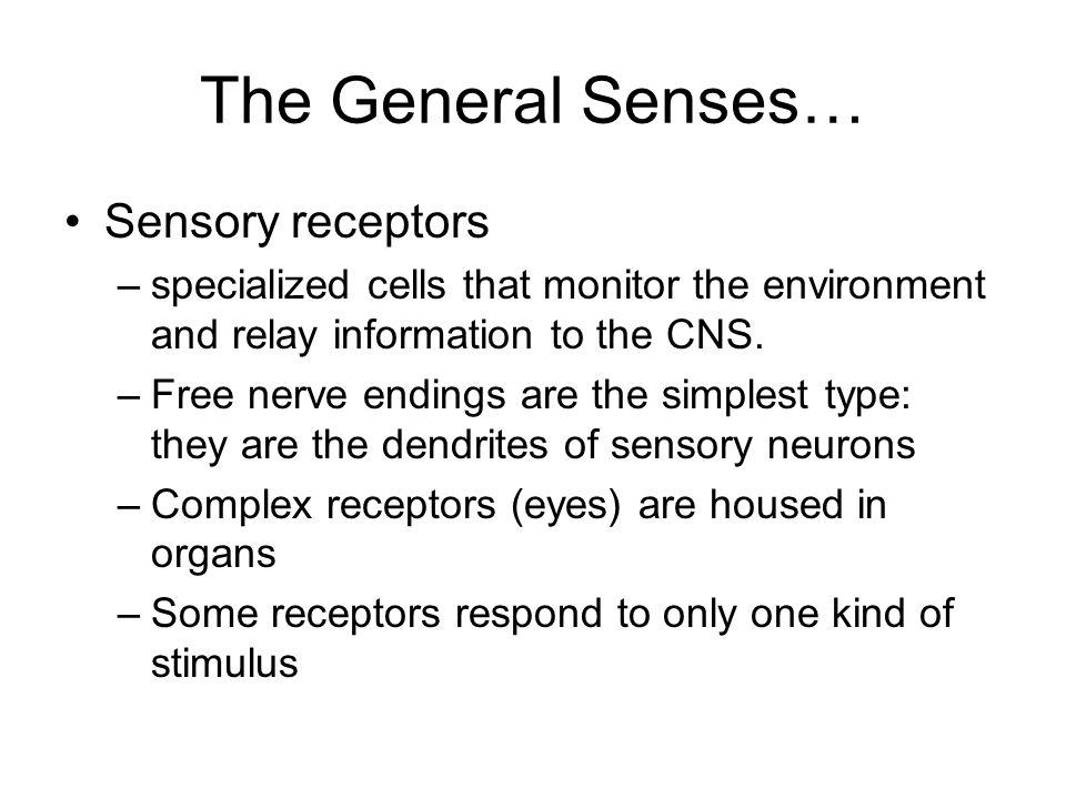 The General Senses… Sensory receptors