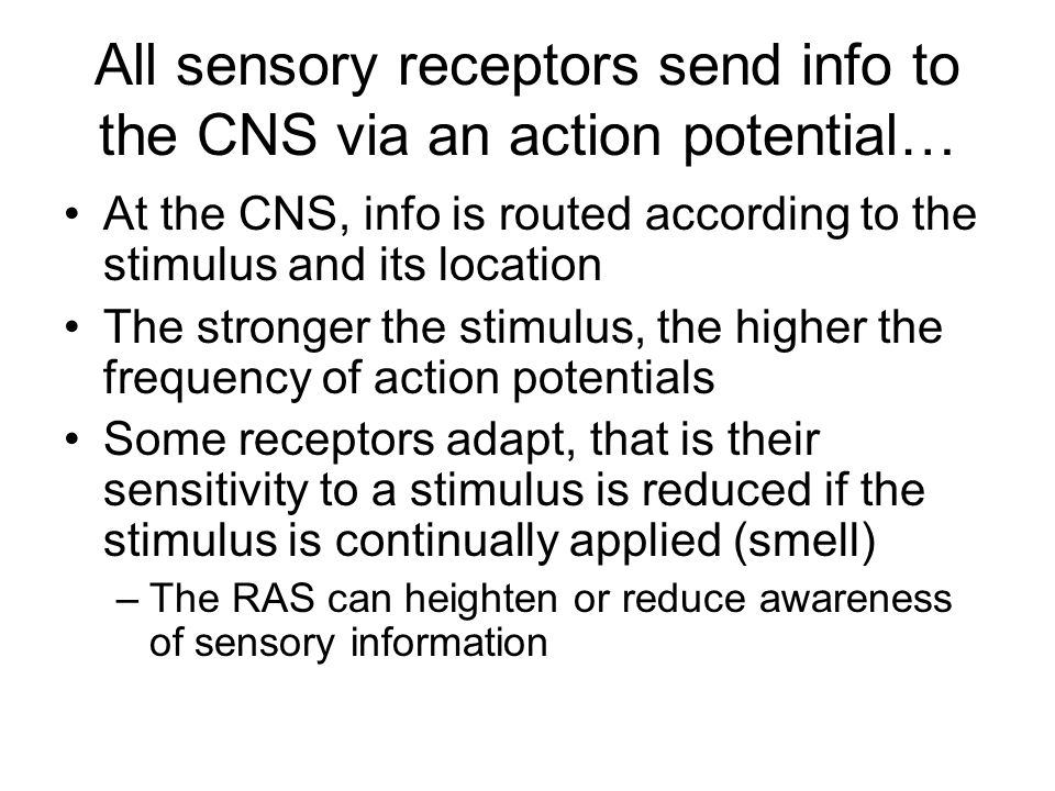 All sensory receptors send info to the CNS via an action potential…