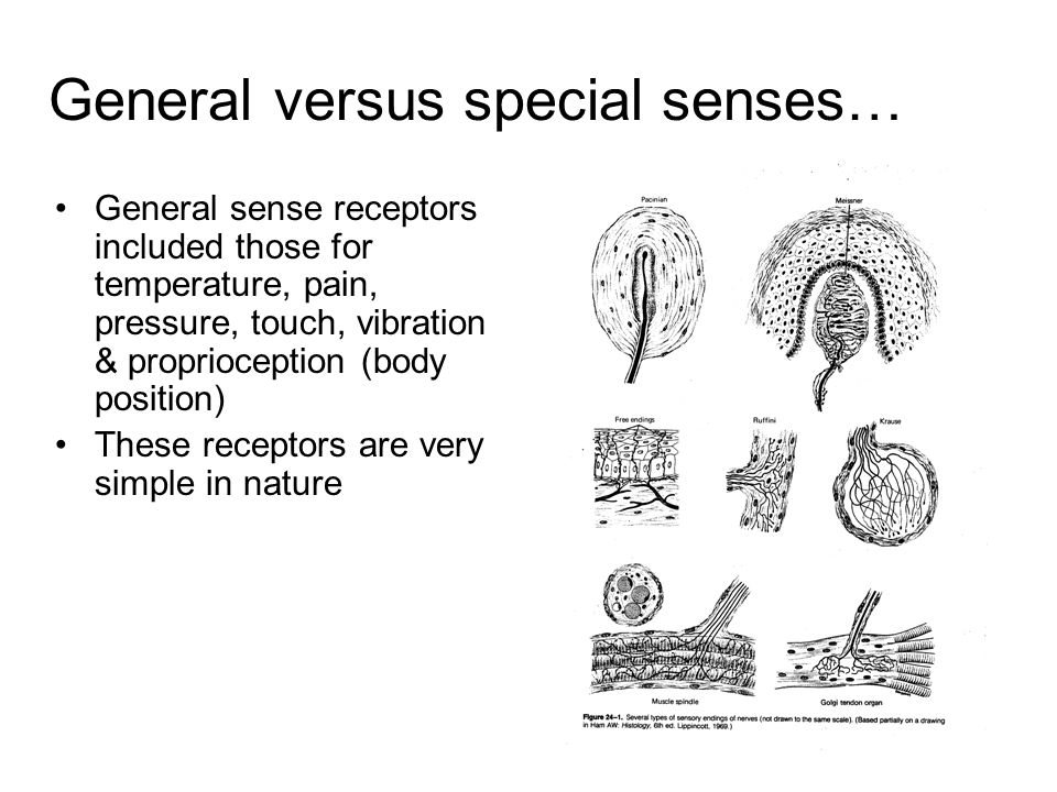 General versus special senses…