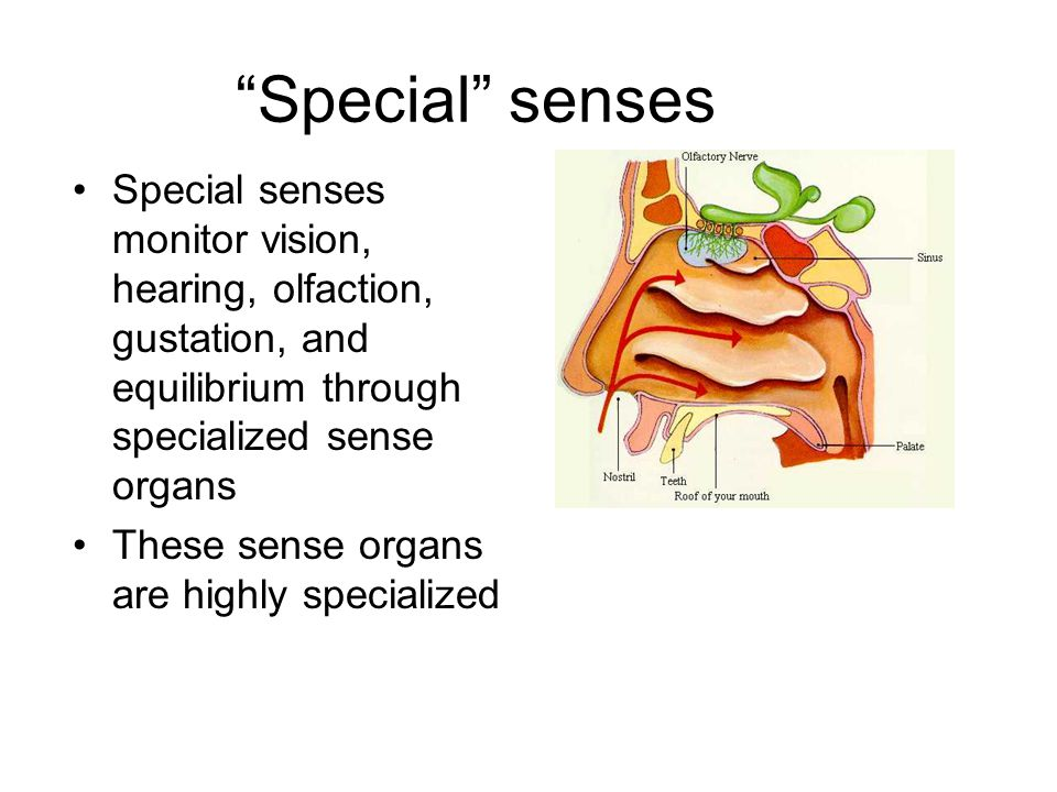 Special senses Special senses monitor vision, hearing, olfaction, gustation, and equilibrium through specialized sense organs.