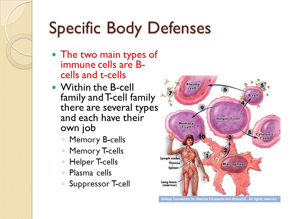 Specific Body Defenses