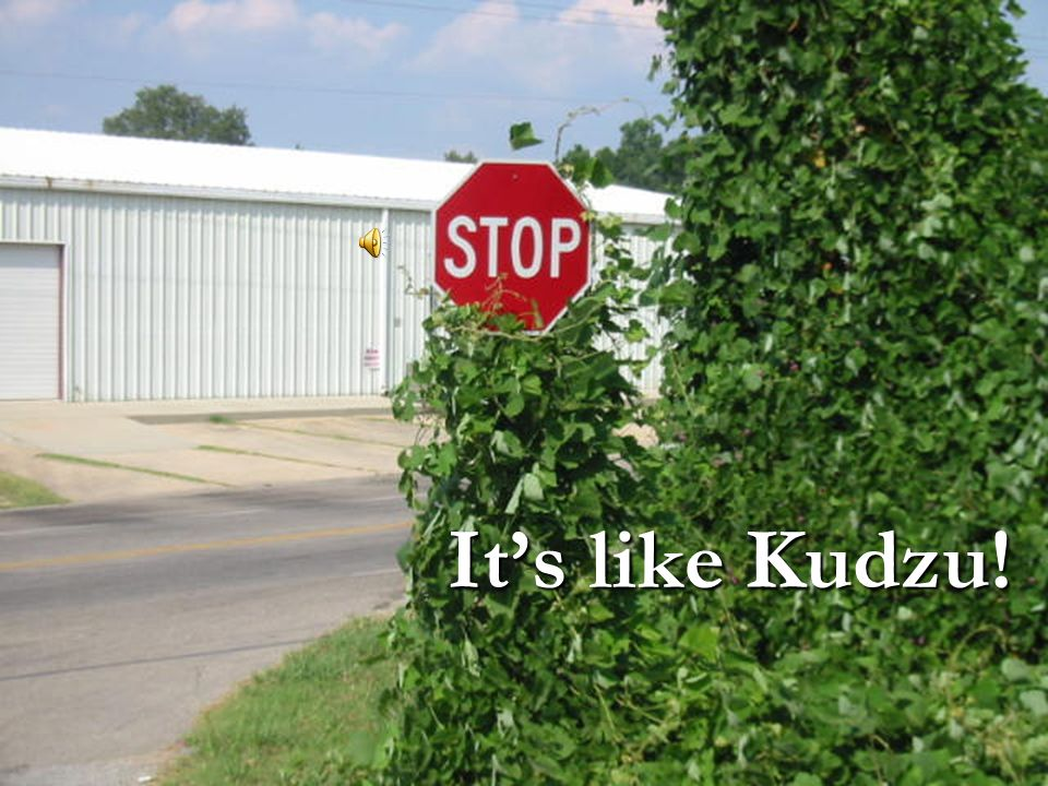 It's like Kudzu!