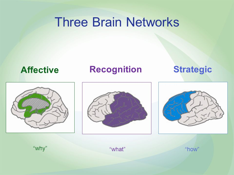Three Brain Networks Affective Recognition Strategic why what