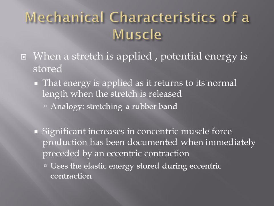 Mechanical Characteristics of a Muscle