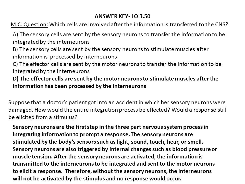 ANSWER KEY- LO 3.50 M.C. Question: Which cells are involved after the information is transferred to the CNS