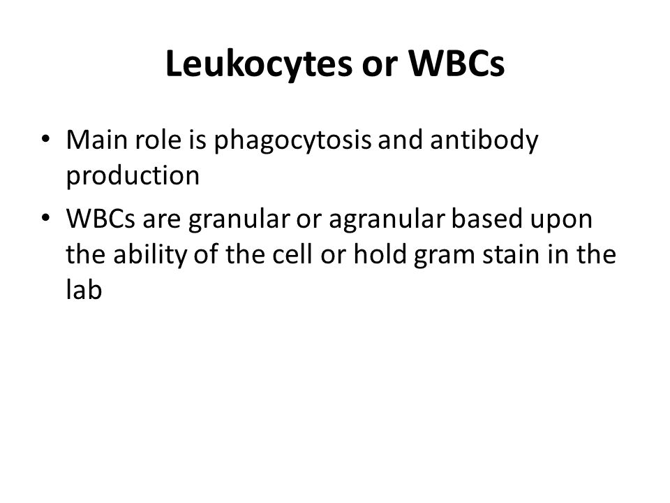 Leukocytes or WBCs Main role is phagocytosis and antibody production