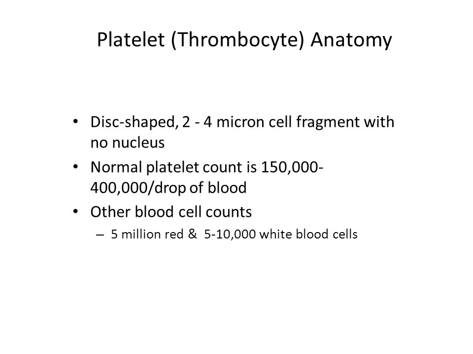 Platelet (Thrombocyte) Anatomy