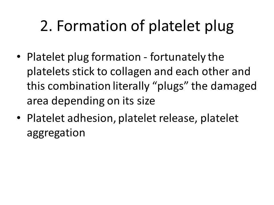 2. Formation of platelet plug