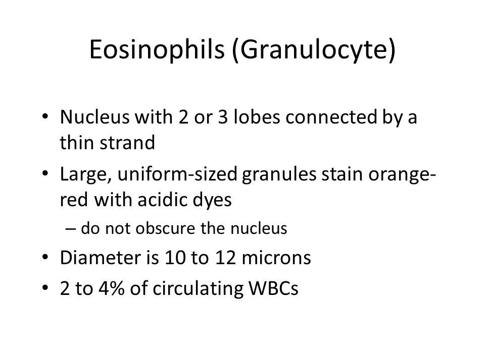 Eosinophils (Granulocyte)