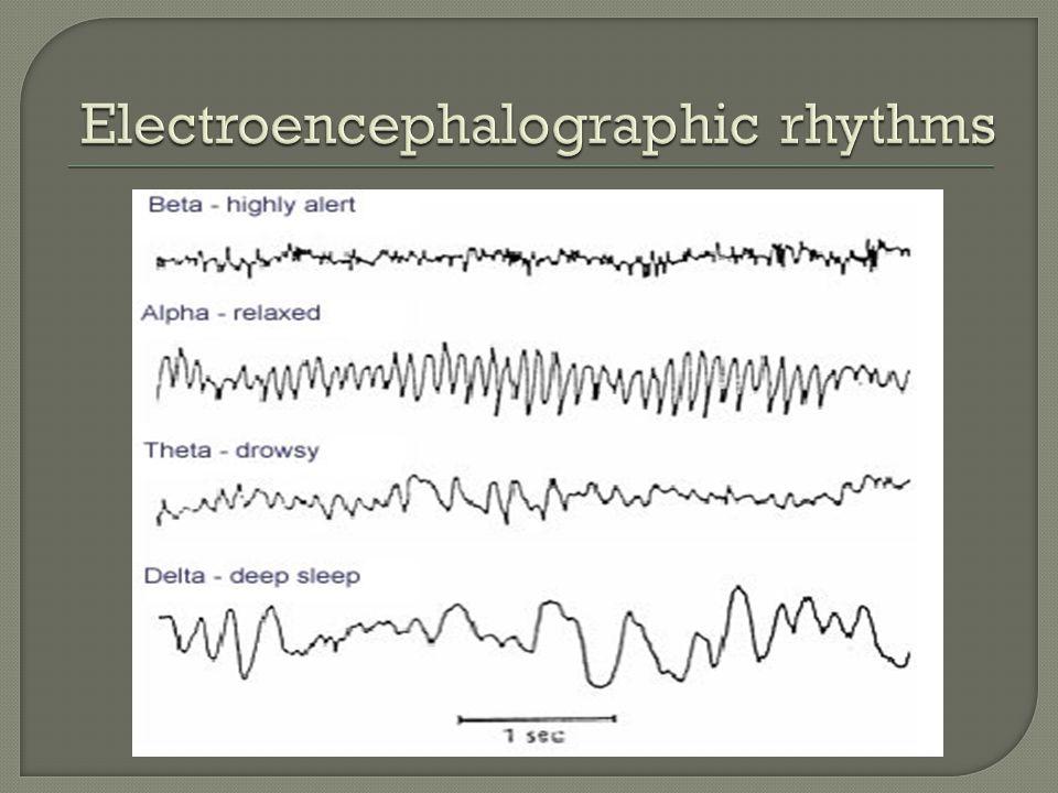 Electroencephalographic rhythms