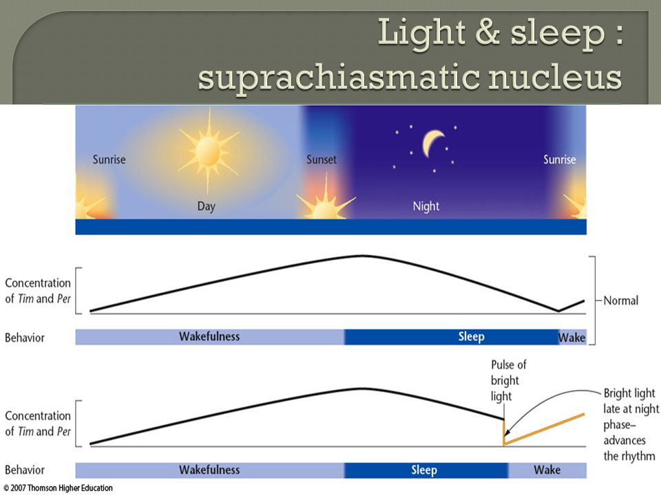 Light & sleep : suprachiasmatic nucleus