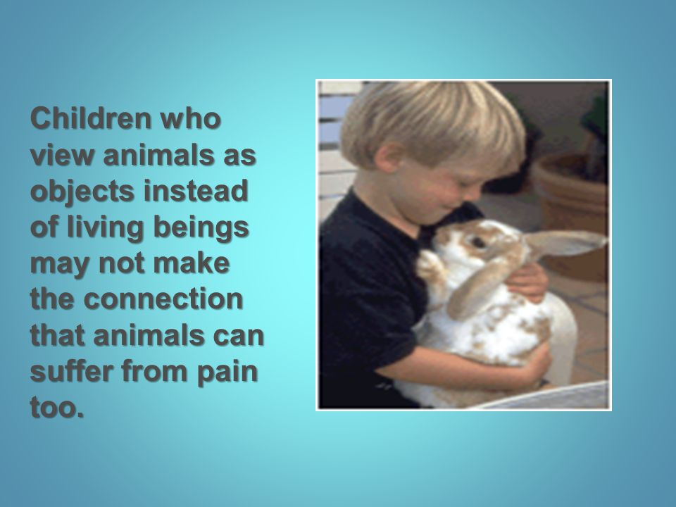 Children who view animals as objects instead of living beings may not make the connection that animals can suffer from pain too.