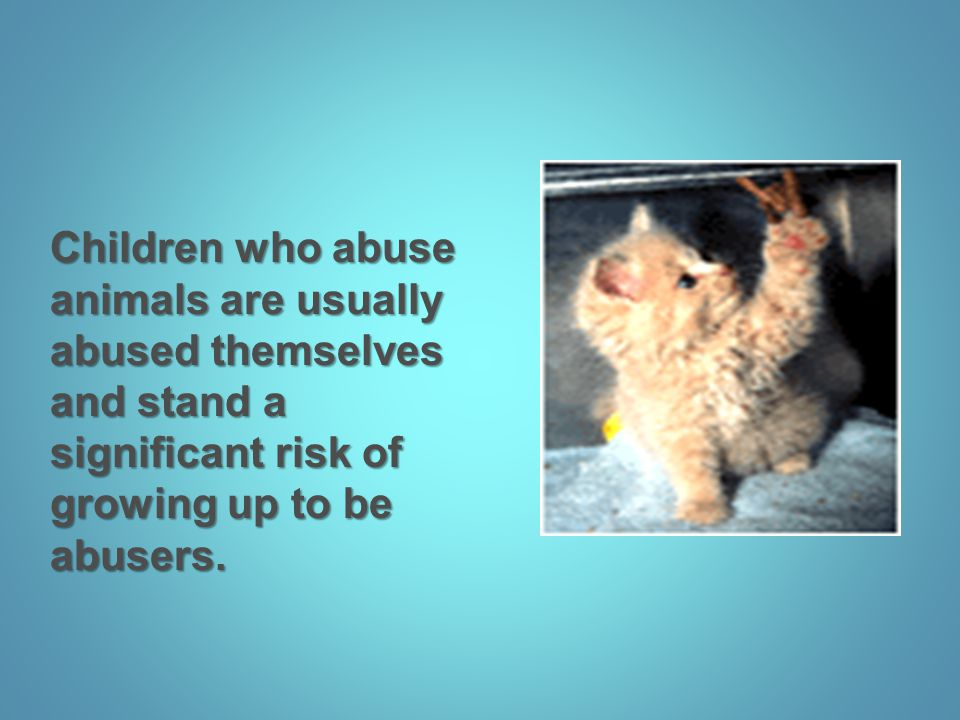 Children who abuse animals are usually abused themselves and stand a significant risk of growing up to be abusers.