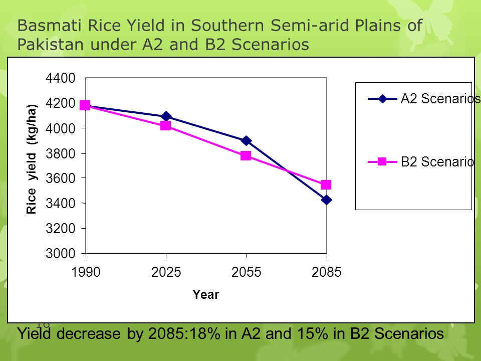 Yield decrease by 2085:18% in A2 and 15% in B2 Scenarios