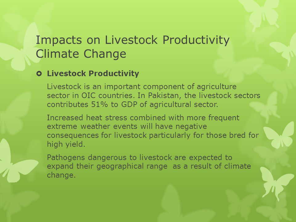 Impacts on Livestock Productivity Climate Change