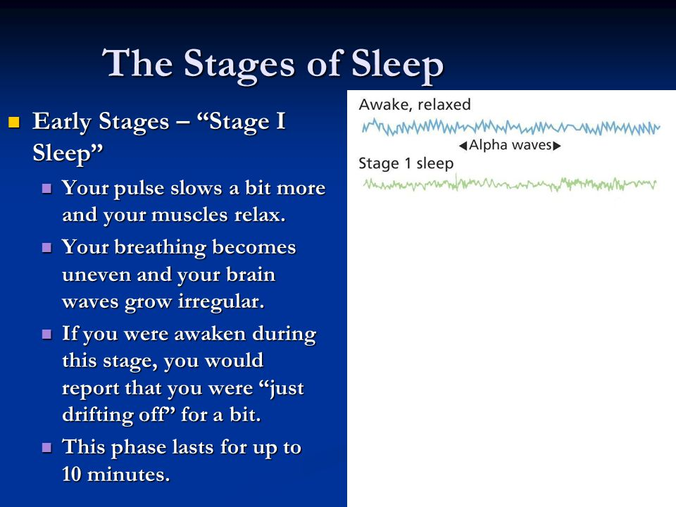 The Stages of Sleep Early Stages – Stage I Sleep