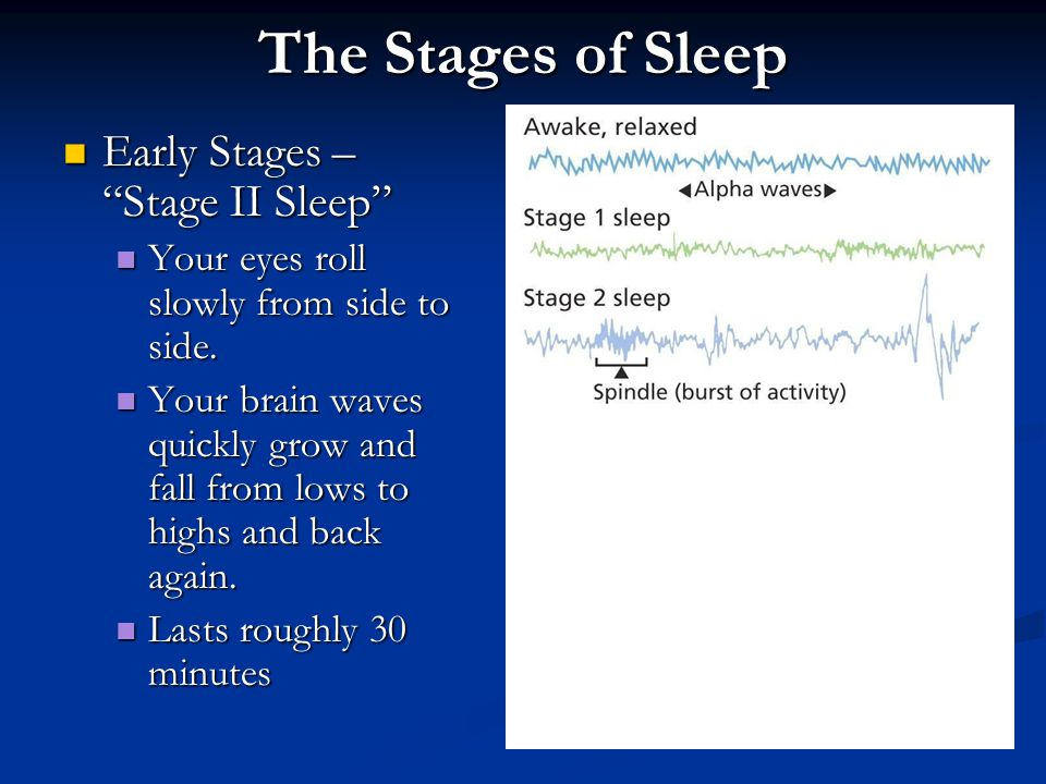 The Stages of Sleep Early Stages – Stage II Sleep