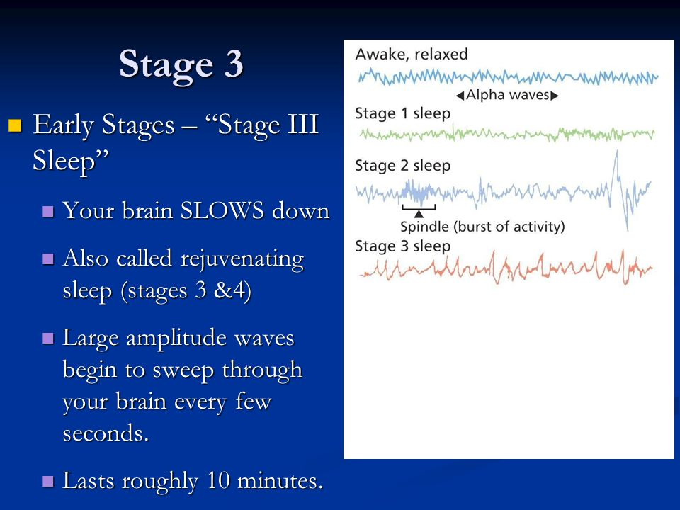 Stage 3 Early Stages – Stage III Sleep Your brain SLOWS down