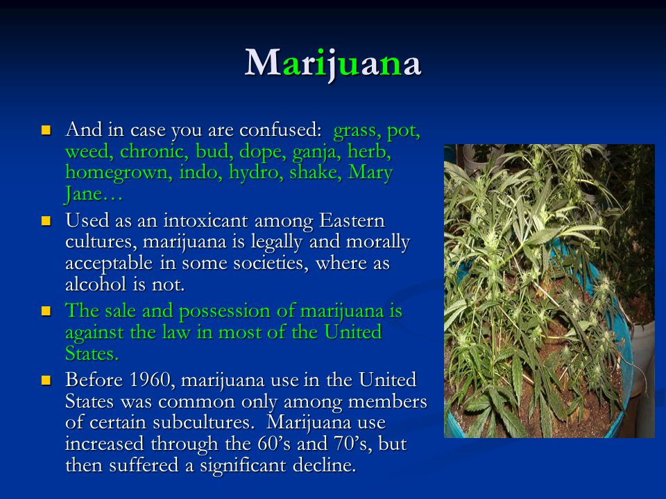 Marijuana And in case you are confused: grass, pot, weed, chronic, bud, dope, ganja, herb, homegrown, indo, hydro, shake, Mary Jane…