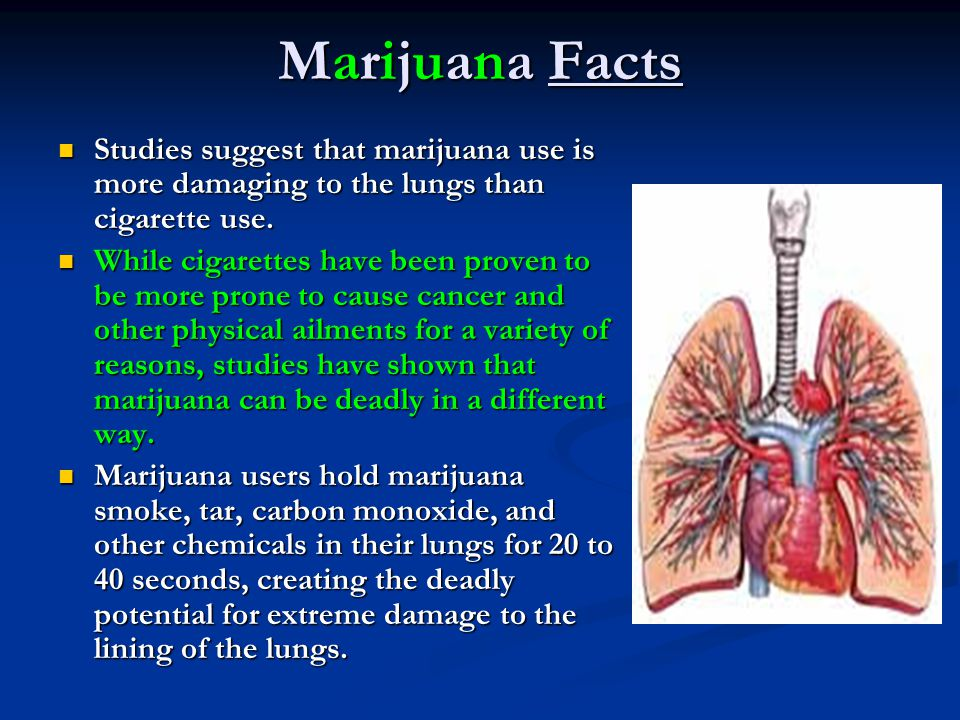 Marijuana Facts Studies suggest that marijuana use is more damaging to the lungs than cigarette use.