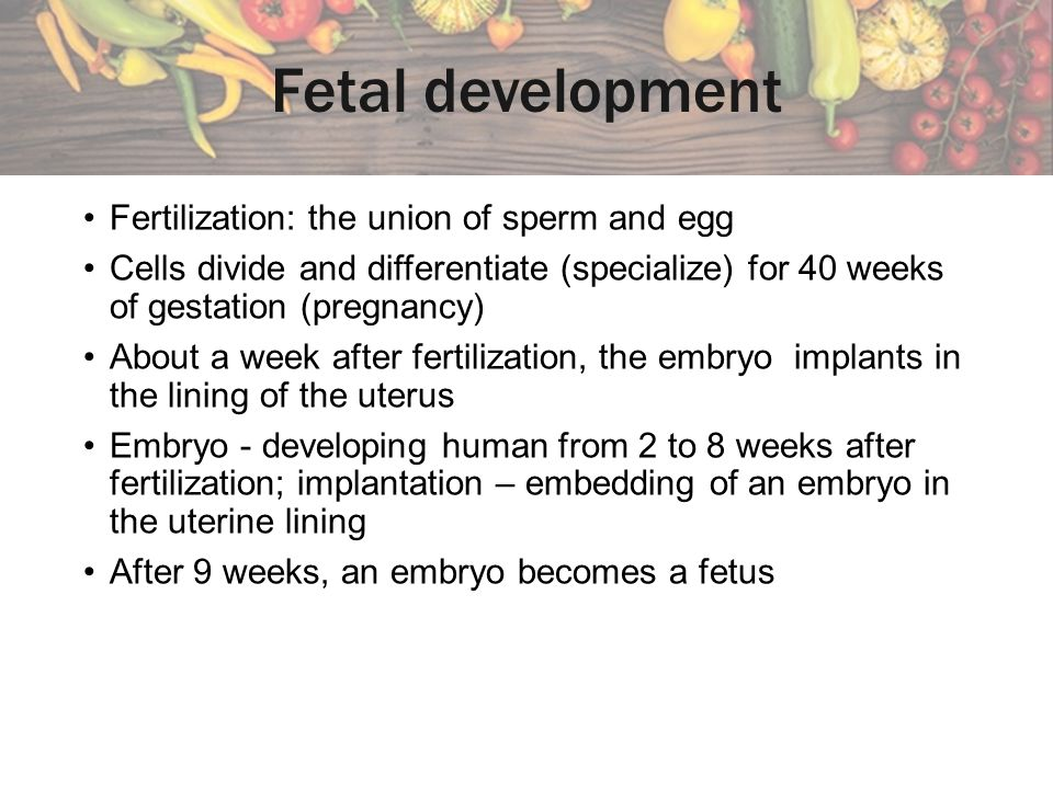 Fetal development Fertilization: the union of sperm and egg