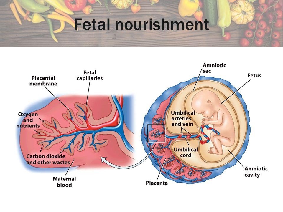 Fetal nourishment
