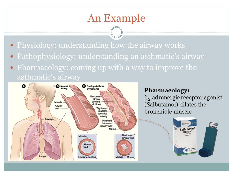 An Example Physiology: understanding how the airway works