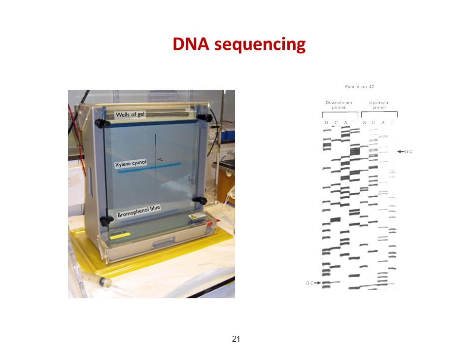 DNA sequencing 21