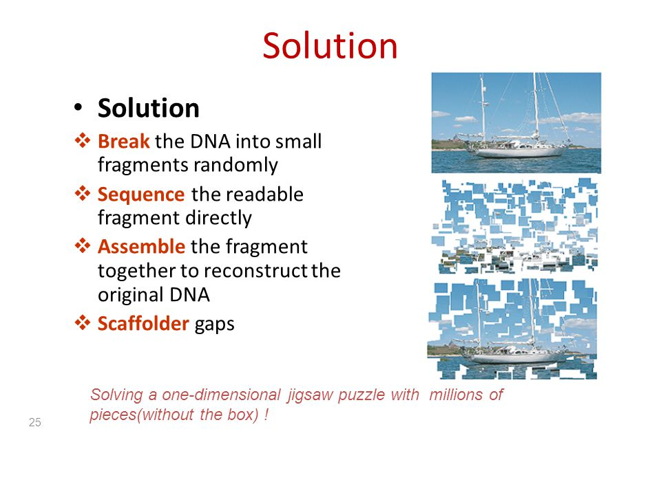 Solution Solution Break the DNA into small fragments randomly