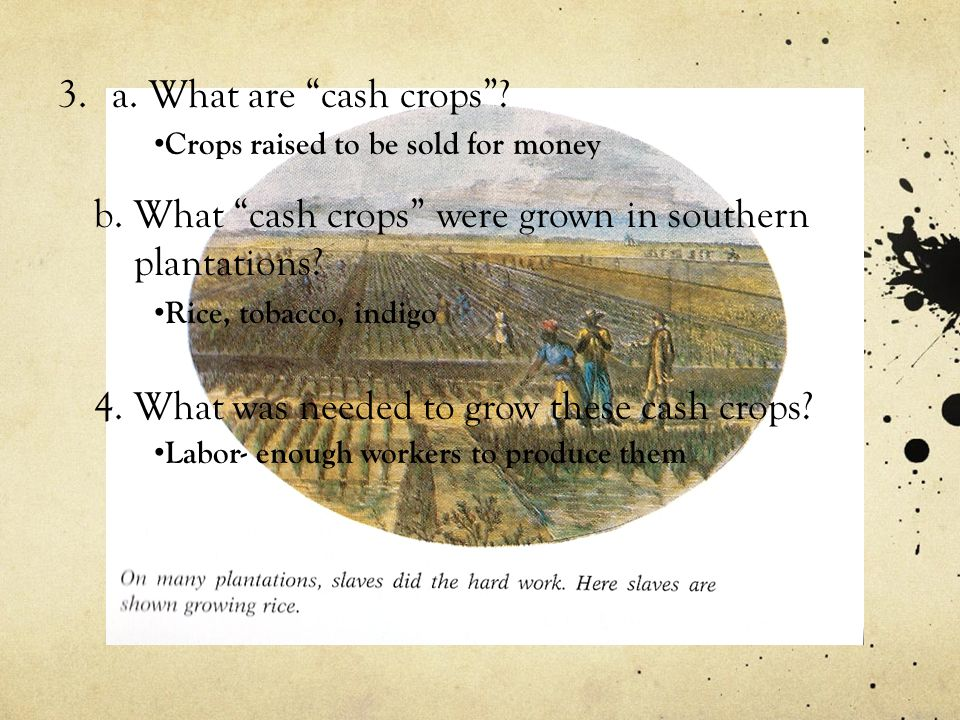 b. What cash crops were grown in southern plantations