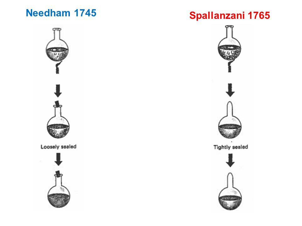 Needham 1745 Spallanzani 1765