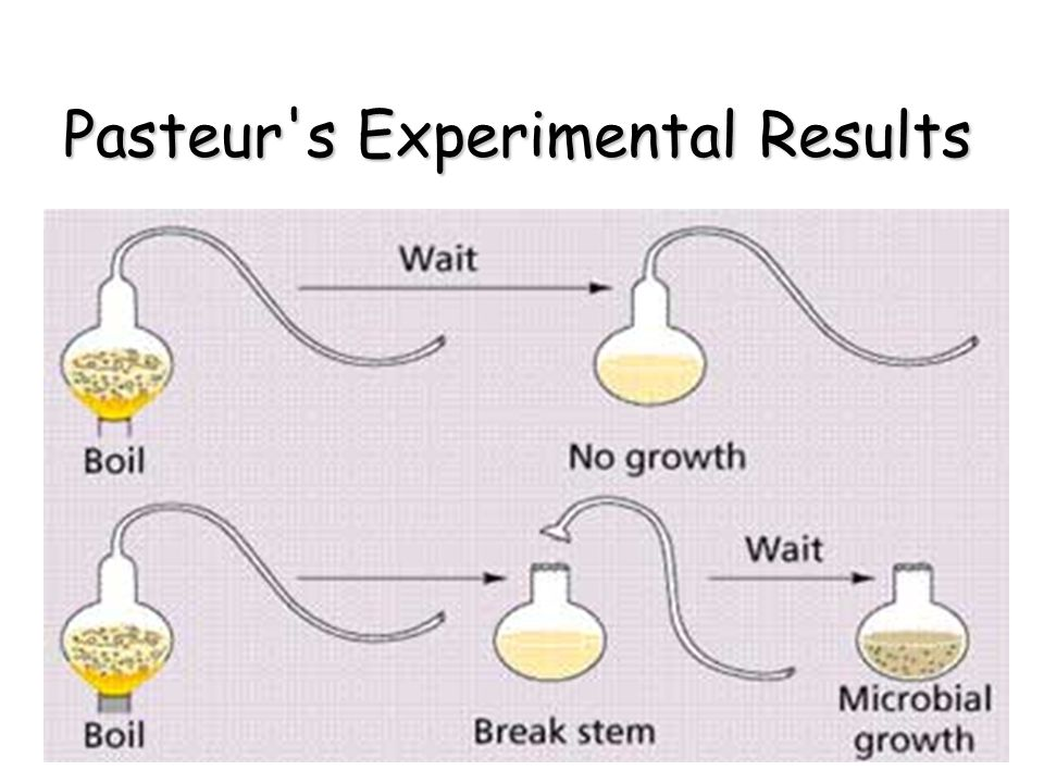 Pasteur s Experimental Results
