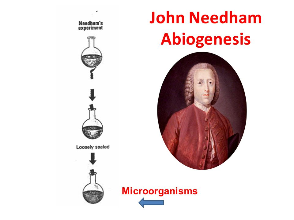 John Needham Abiogenesis
