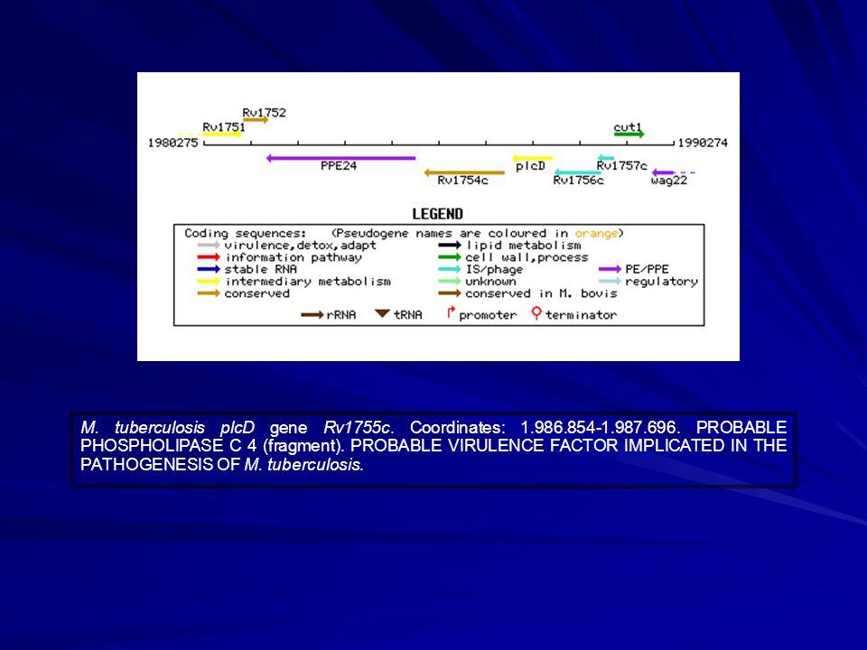 M. tuberculosis plcD gene Rv1755c. Coordinates: 1.986.854-1.987.696.