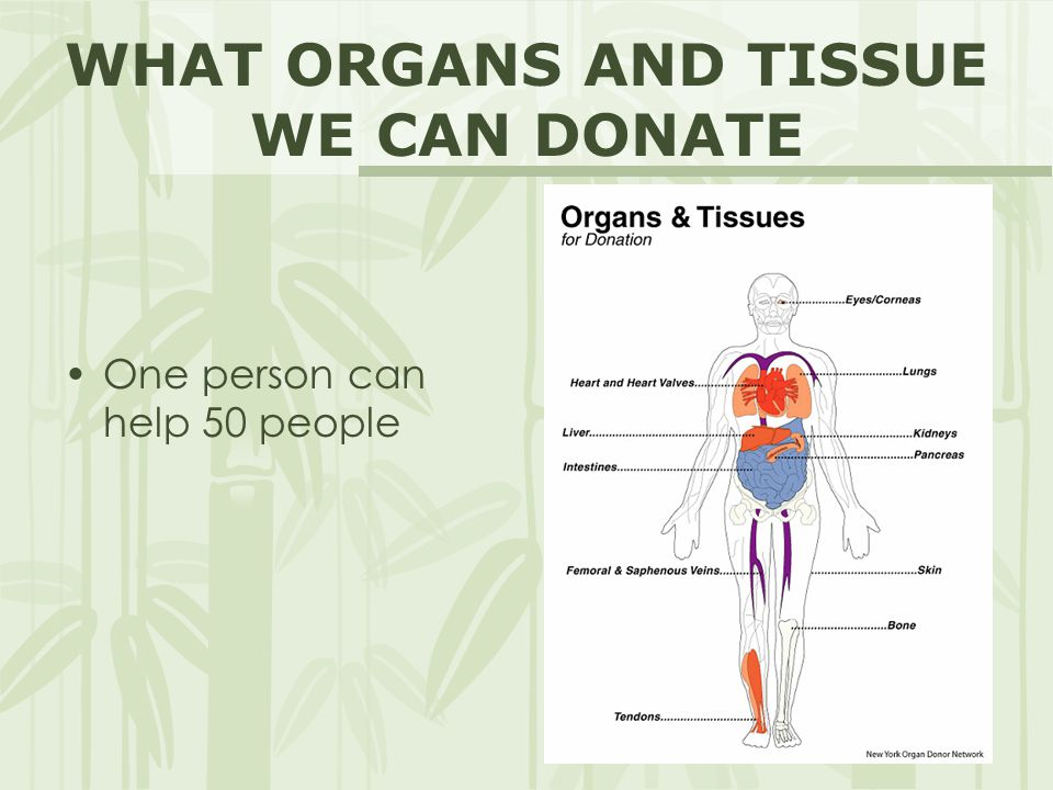 WHAT ORGANS AND TISSUE WE CAN DONATE