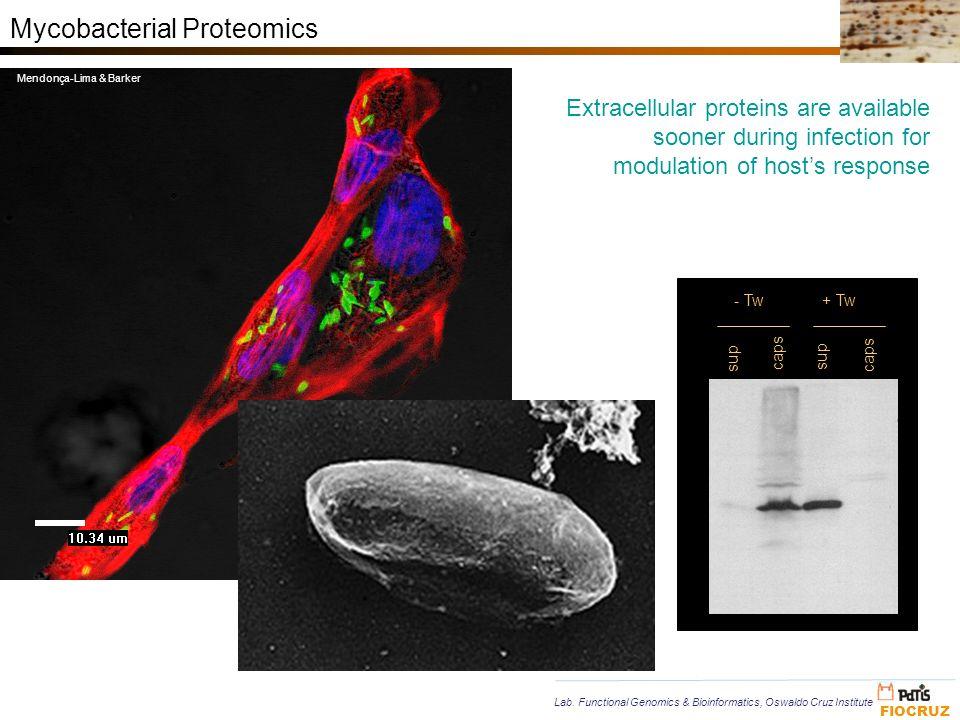 Mycobacterial Proteomics