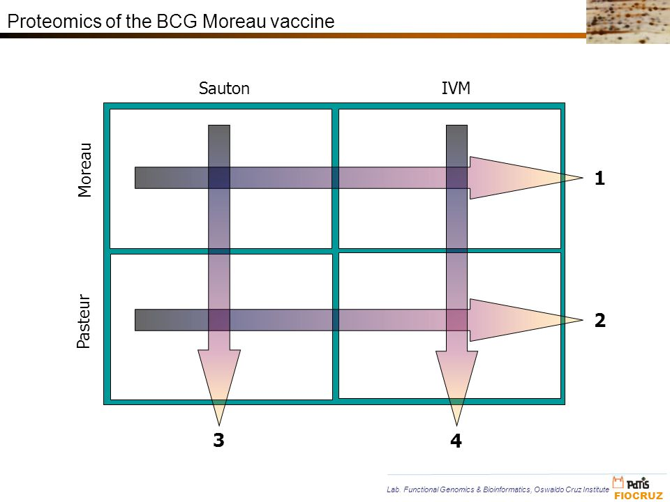 Proteomics of the BCG Moreau vaccine