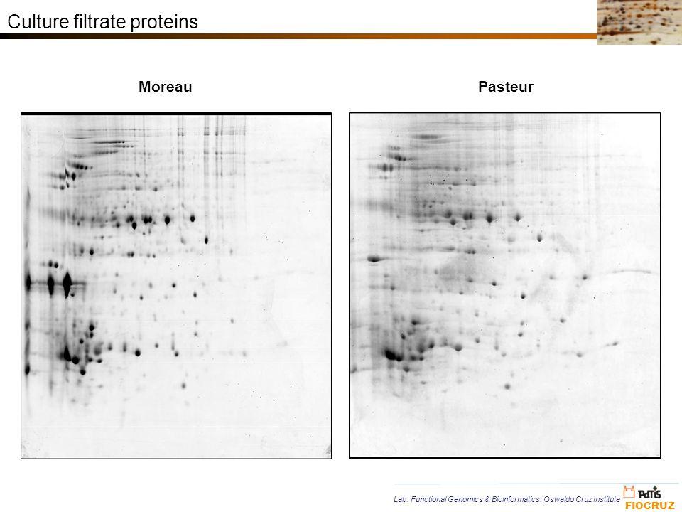 Culture filtrate proteins