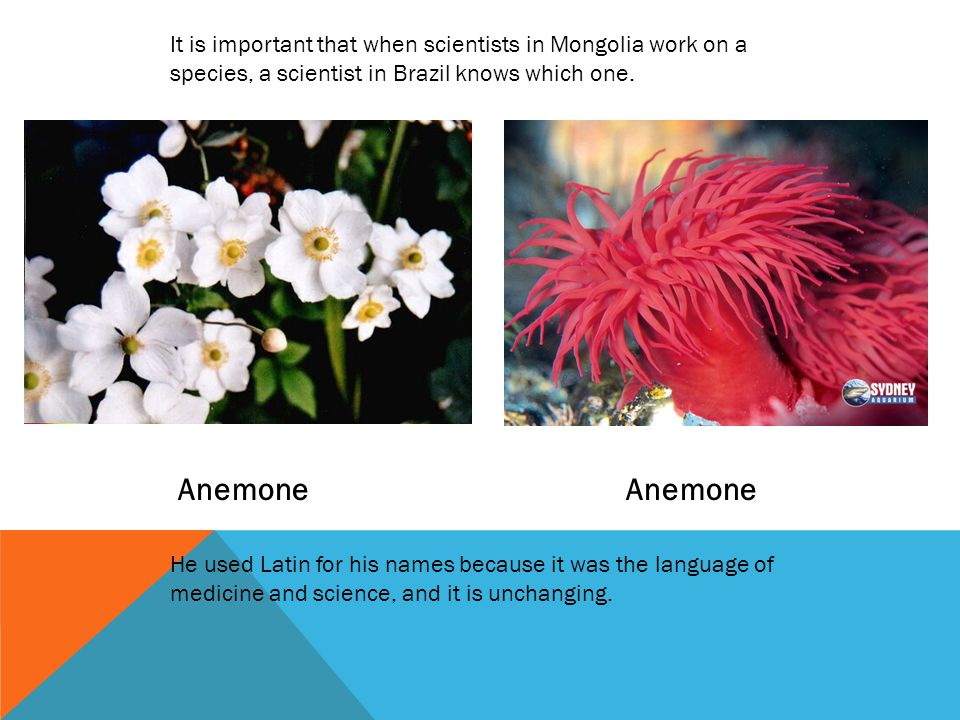 It is important that when scientists in Mongolia work on a species, a scientist in Brazil knows which one.
