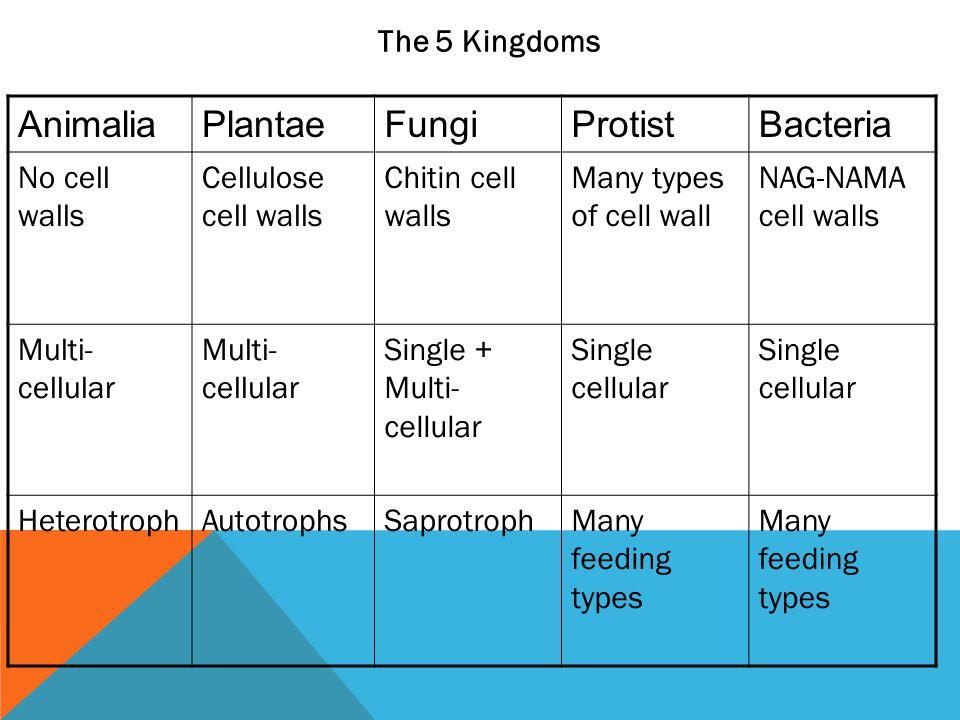 Animalia Plantae Fungi Protist Bacteria The 5 Kingdoms No cell walls