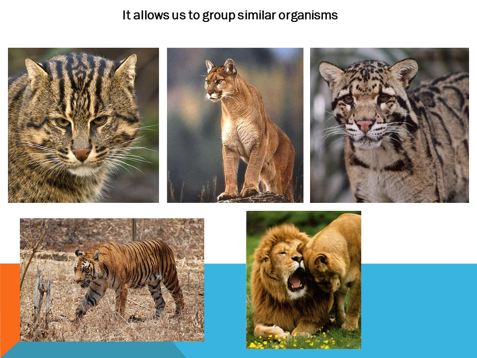 It allows us to group similar organisms