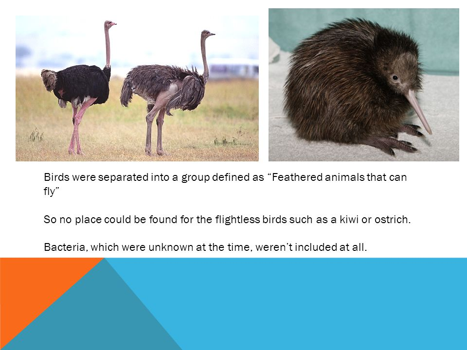 Birds were separated into a group defined as Feathered animals that can fly